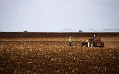 Black farmers' body supports ANC land-expropriation policy