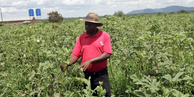 Black Farmers' Struggle For Land Is Just The Beginning